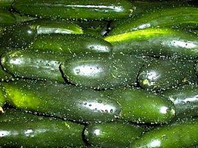 Garden cucumber